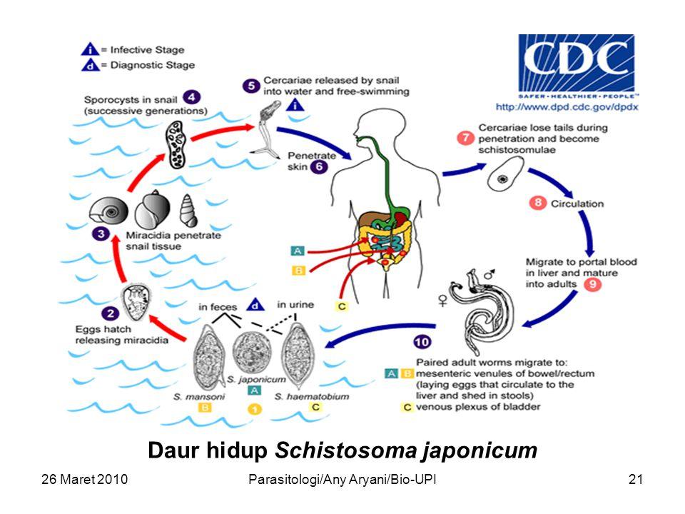 26 Maret 2010Parasitologi/Any Aryani/Bio-UPI21 Daur hidup Schistosoma japonicum