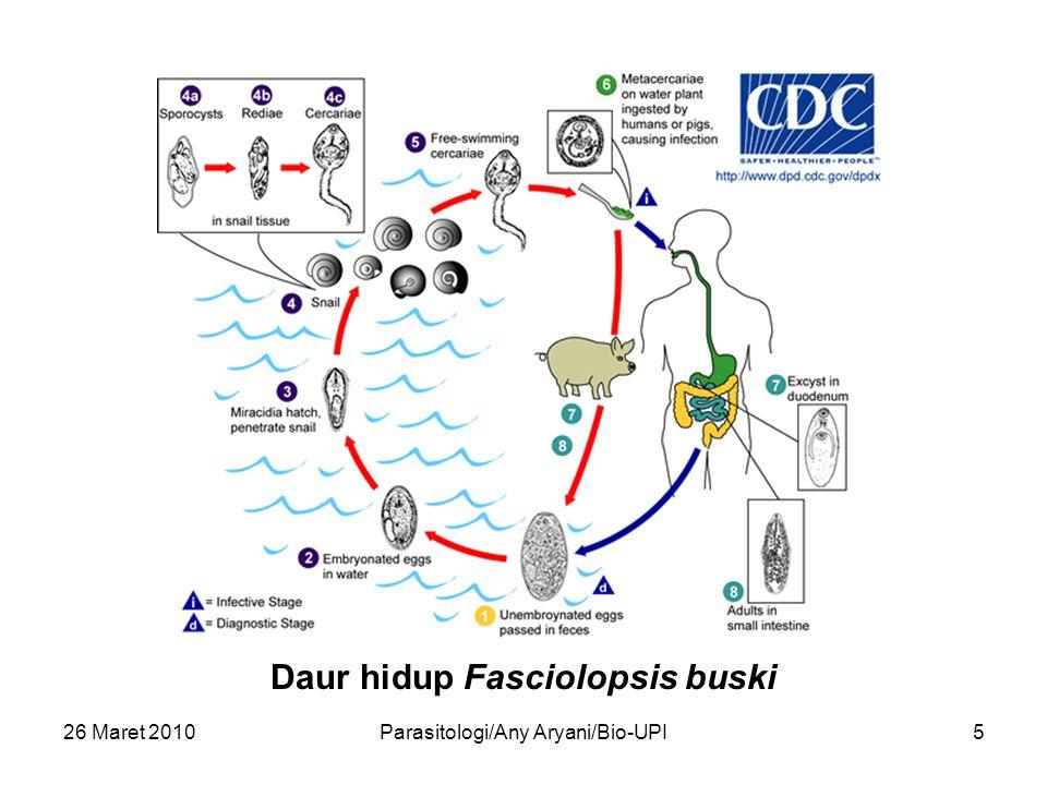26 Maret 2010Parasitologi/Any Aryani/Bio-UPI5 Daur hidup Fasciolopsis buski