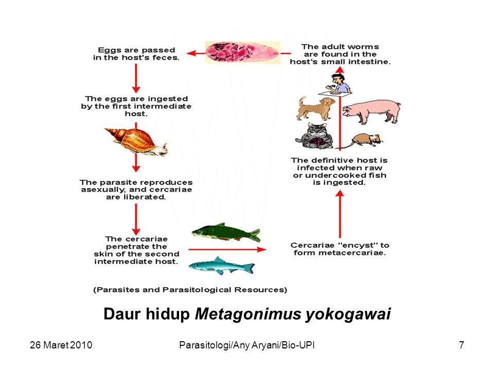 26 Maret 2010Parasitologi/Any Aryani/Bio-UPI7 Daur hidup Metagonimus yokogawai