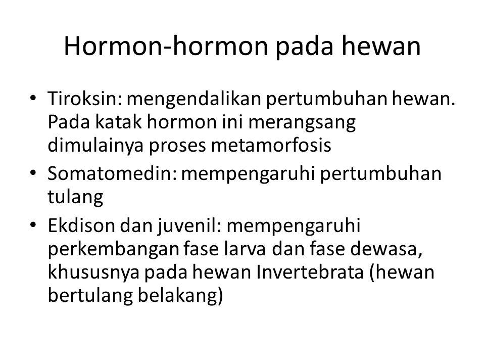 Hormon-hormon pada hewan Tiroksin: mengendalikan pertumbuhan hewan. Pada katak hormon ini merangsang dimulainya proses metamorfosis Somatomedin: mempe