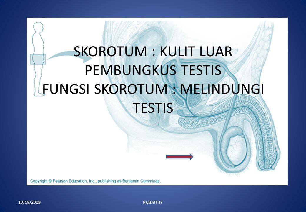 1. SKOROTUM 2. TESTIS 3.EPIDIDIMIS 4. VAS DIFERENS 5. KELENJAR PROSTAT 6. PENGUMPUL SPERMA 7. URETRA 8. PENIS 10/18/1009 RUBAITHY