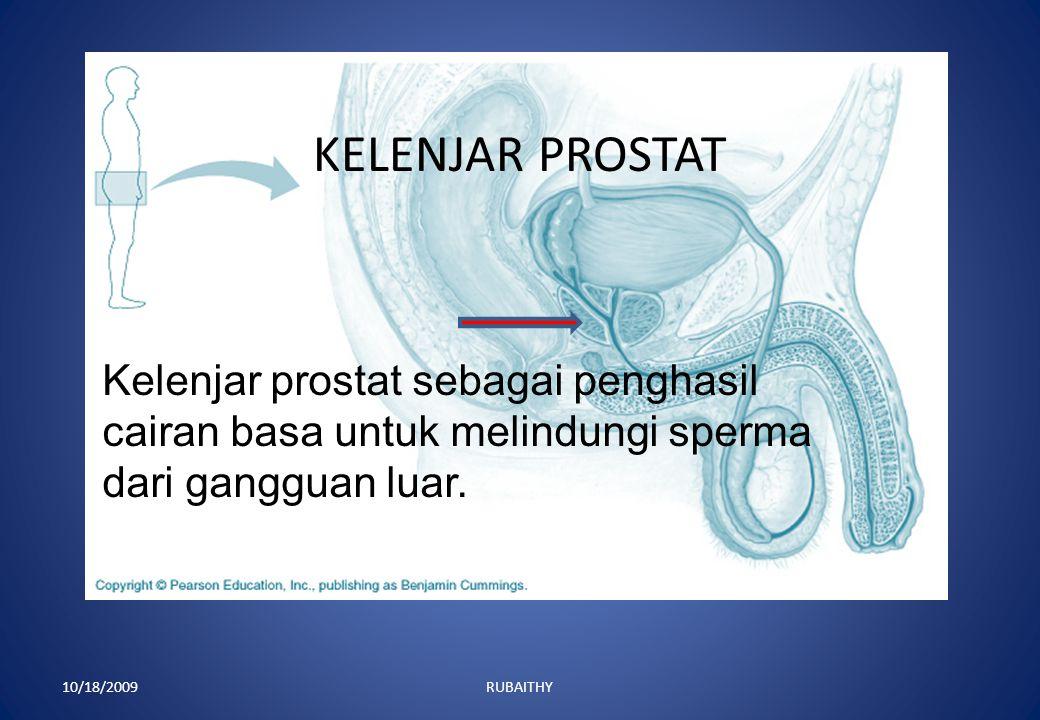 VAS DIFERENS : 10/18/2009RUBAITHY Vas deferens adalah saluran dari epididimis yang membawa sperma ke pengumpul sperma.