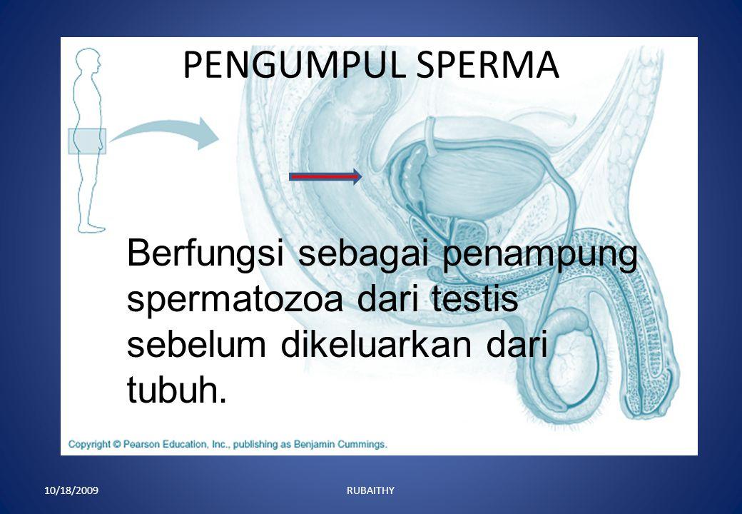 KELENJAR PROSTAT 10/18/2009RUBAITHY Kelenjar prostat sebagai penghasil cairan basa untuk melindungi sperma dari gangguan luar.