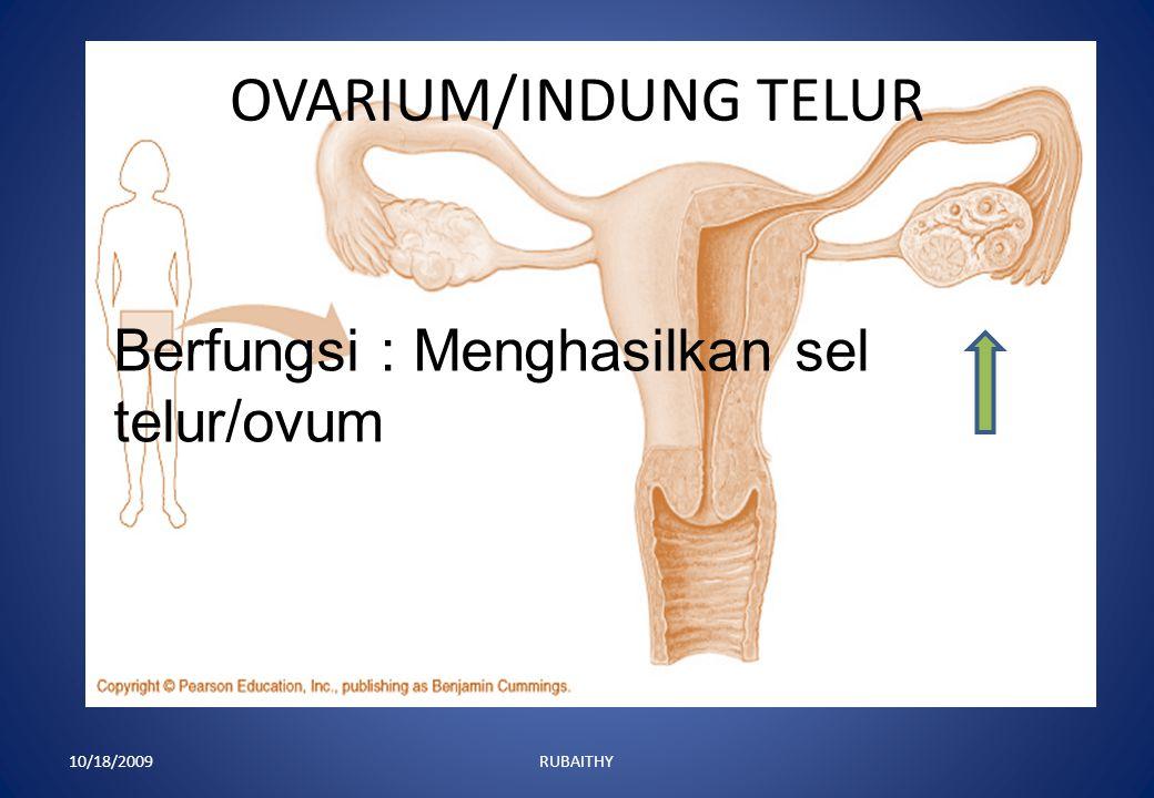 OVIDUK/TUBA FALOPPI/SALURAN TELUR 10/18/2009RUBAITHY Berfungsi sebagai tempat menyalurkan telur dari ovarium ke uterus dan tempat pembuahan.