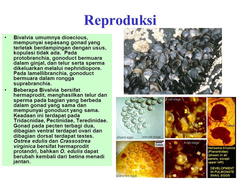 HabitatCara makanJenis Badan airFilter feederKerang mutiara, tiram daging, kerang hijau Permukaan/Dalam substrat Detritus feeder, filter feeder Kerang