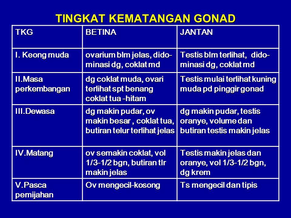 betinajantan GONAD Digestive gland ovarium testis
