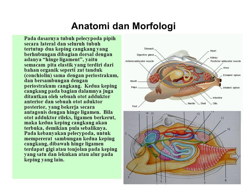 Anatomi dan Morfologi