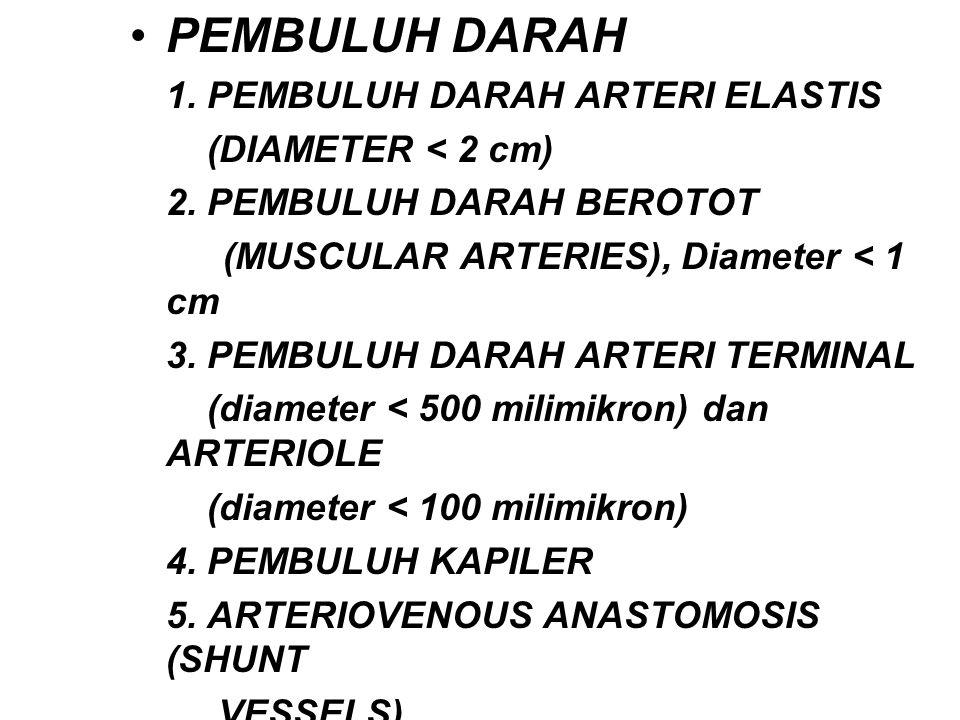 PEMBULUH DARAH 1. PEMBULUH DARAH ARTERI ELASTIS (DIAMETER < 2 cm) 2. PEMBULUH DARAH BEROTOT (MUSCULAR ARTERIES), Diameter < 1 cm 3. PEMBULUH DARAH ART