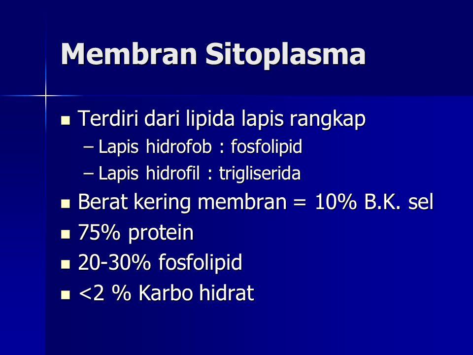 Membran Sitoplasma Terdiri dari lipida lapis rangkap Terdiri dari lipida lapis rangkap –Lapis hidrofob : fosfolipid –Lapis hidrofil : trigliserida Ber