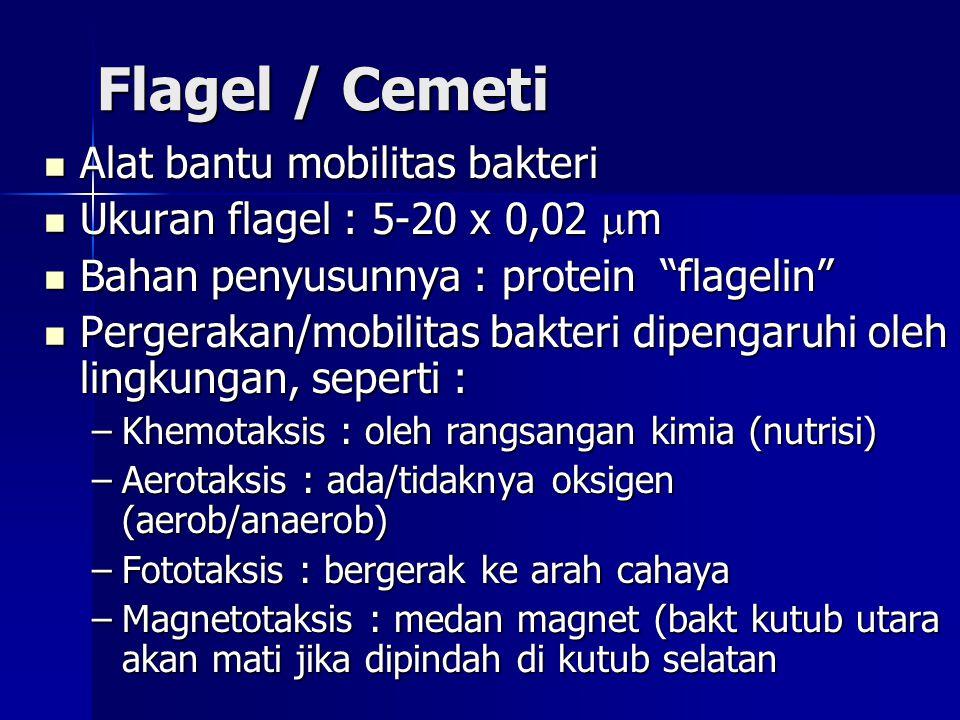 Flagel / Cemeti Alat bantu mobilitas bakteri Alat bantu mobilitas bakteri Ukuran flagel : 5-20 x 0,02  m Ukuran flagel : 5-20 x 0,02  m Bahan penyus