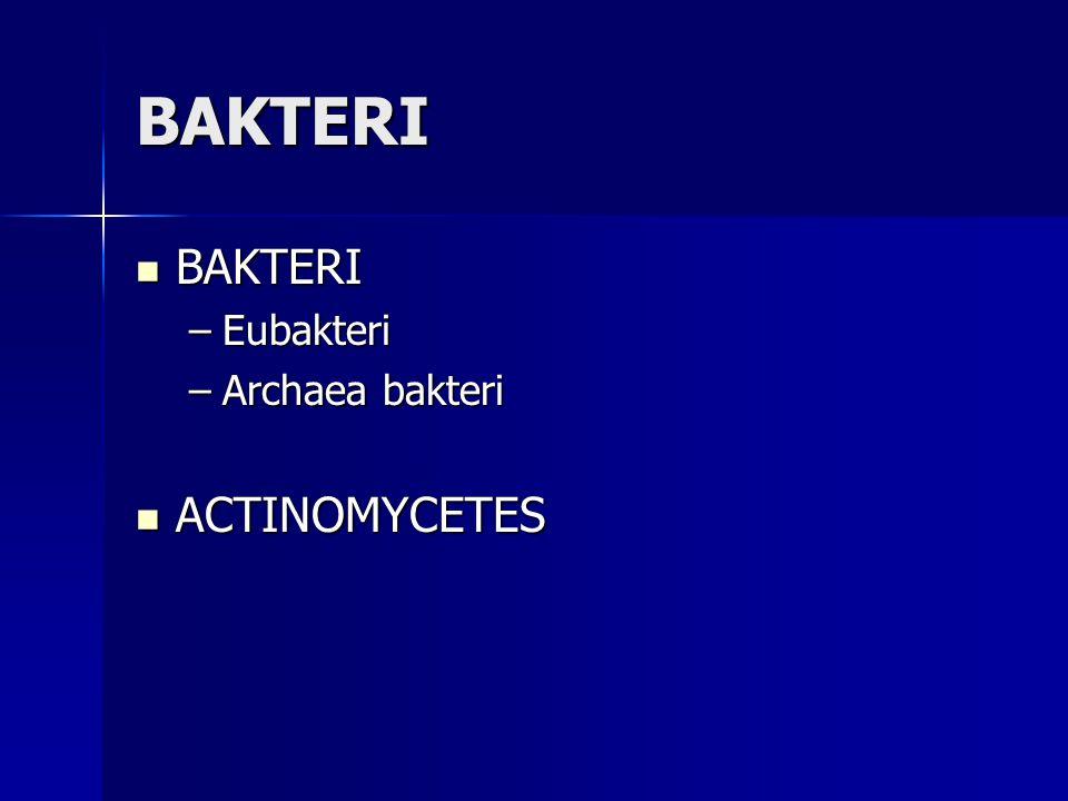 BAKTERI BAKTERI BAKTERI –Eubakteri –Archaea bakteri ACTINOMYCETES ACTINOMYCETES