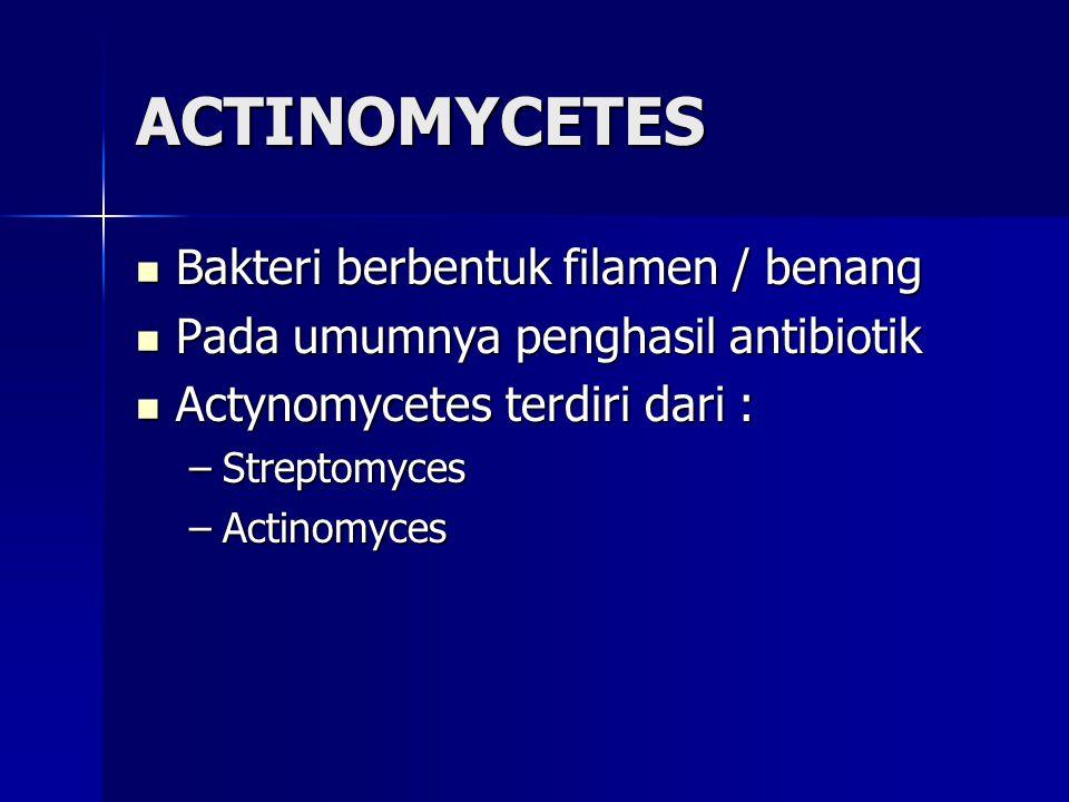 ACTINOMYCETES Bakteri berbentuk filamen / benang Bakteri berbentuk filamen / benang Pada umumnya penghasil antibiotik Pada umumnya penghasil antibioti
