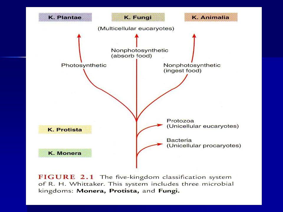Membran Sitoplasma Terdiri dari lipida lapis rangkap Terdiri dari lipida lapis rangkap –Lapis hidrofob : fosfolipid –Lapis hidrofil : trigliserida Berat kering membran = 10% B.K.