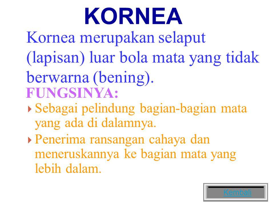KORNEA Kornea merupakan selaput (lapisan) luar bola mata yang tidak berwarna (bening).