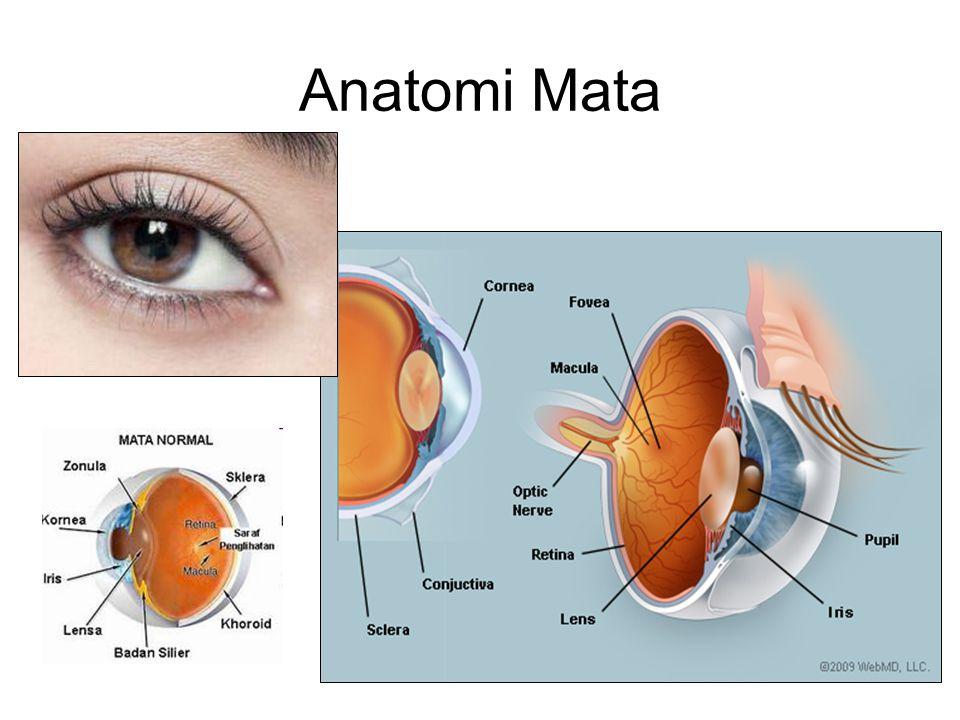 Problem / Keluhan Mata Mata merah Mata / penglihatan kabur Mata nyeri Perubahan bentuk / gerak bola mata