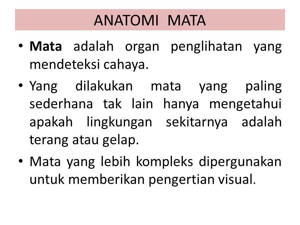 ANATOMI MATA Mata adalah organ penglihatan yang mendeteksi cahaya. Yang dilakukan mata yang paling sederhana tak lain hanya mengetahui apakah lingkung
