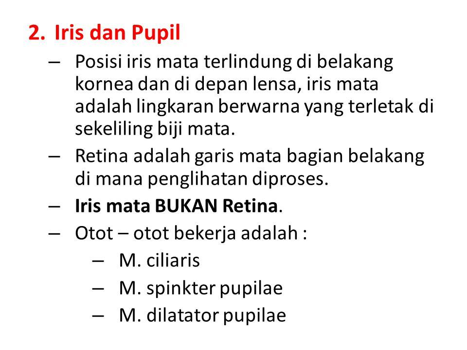2.Iris dan Pupil – Posisi iris mata terlindung di belakang kornea dan di depan lensa, iris mata adalah lingkaran berwarna yang terletak di sekeliling