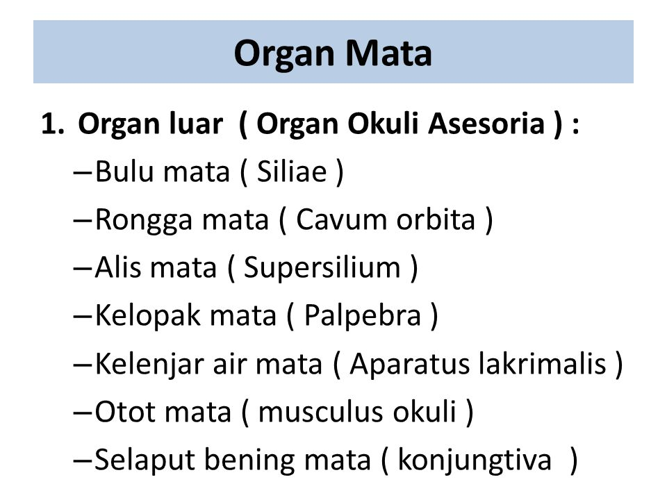 Organ Mata 1.Organ luar ( Organ Okuli Asesoria ) : – Bulu mata ( Siliae ) – Rongga mata ( Cavum orbita ) – Alis mata ( Supersilium ) – Kelopak mata (