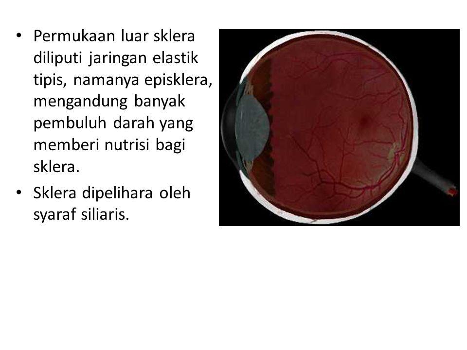 Permukaan luar sklera diliputi jaringan elastik tipis, namanya episklera, mengandung banyak pembuluh darah yang memberi nutrisi bagi sklera. Sklera di