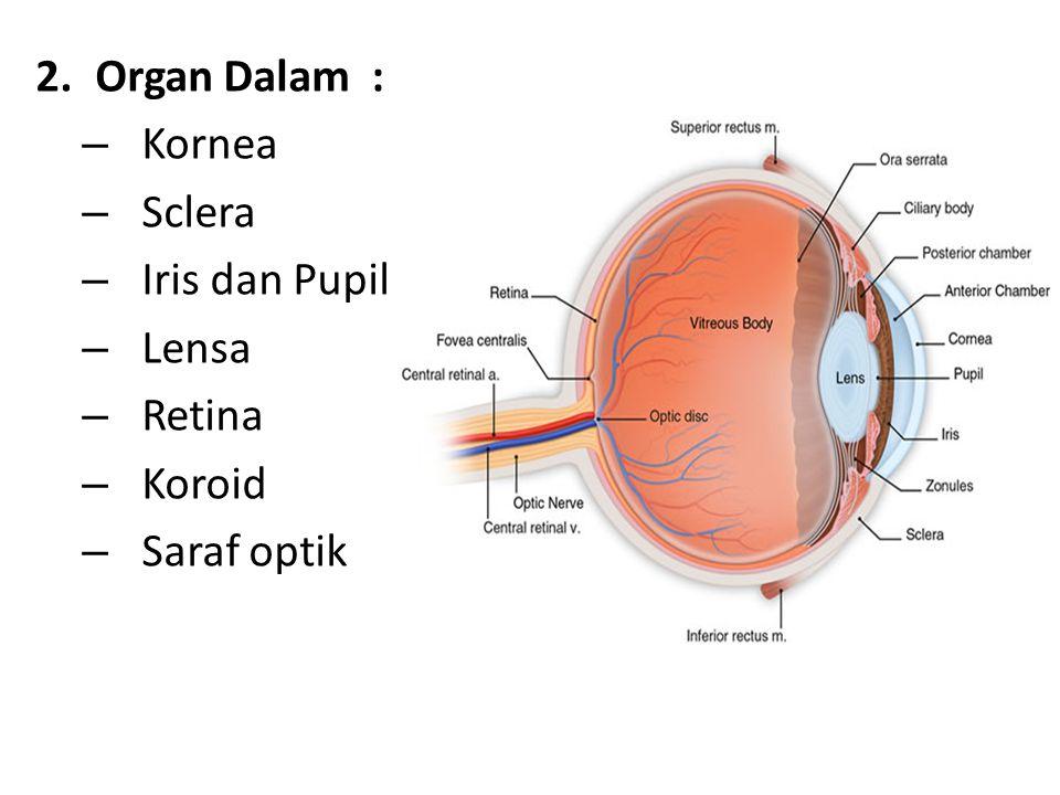 2.Organ Dalam : – Kornea – Sclera – Iris dan Pupil – Lensa – Retina – Koroid – Saraf optik