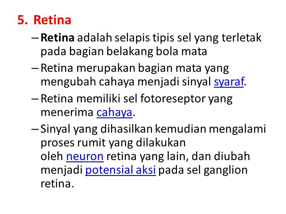 5.Retina – Retina adalah selapis tipis sel yang terletak pada bagian belakang bola mata – Retina merupakan bagian mata yang mengubah cahaya menjadi si