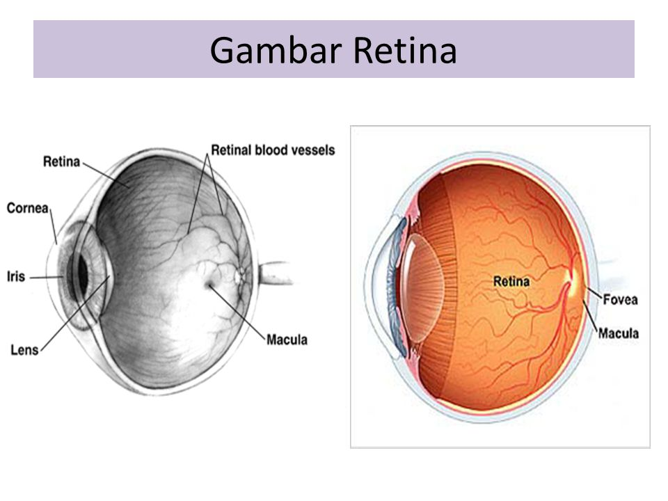 Gambar Retina