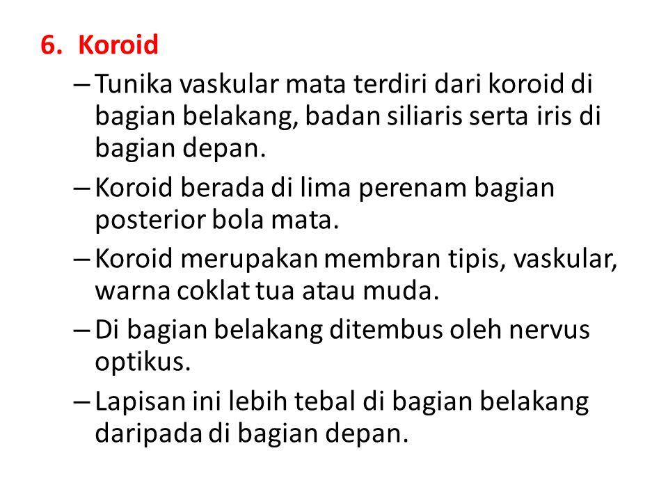 6.Koroid – Tunika vaskular mata terdiri dari koroid di bagian belakang, badan siliaris serta iris di bagian depan. – Koroid berada di lima perenam bag