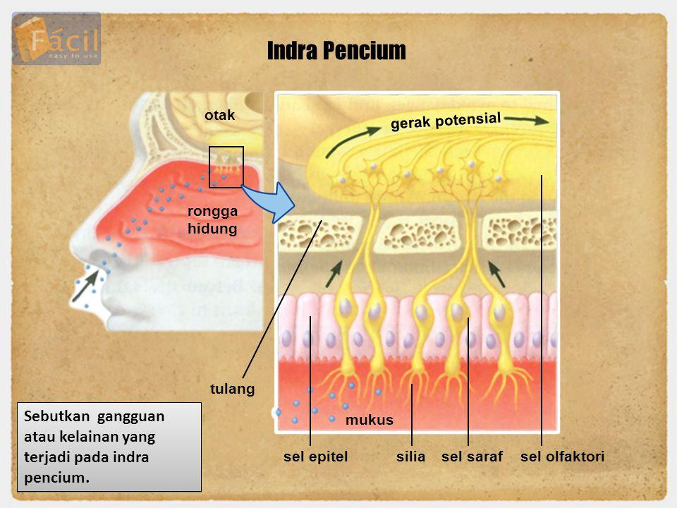 Indra Pencium otak rongga hidung gerak potensial sel epitel mukus siliasel sarafsel olfaktori tulang Sebutkan gangguan atau kelainan yang terjadi pada
