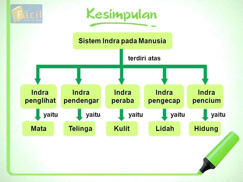 Sistem Indra pada Manusia terdiri atas Indra penglihat Indra pendengar Indra peraba Indra pengecap Indra pencium yaitu MataTelingaKulitLidahHidung