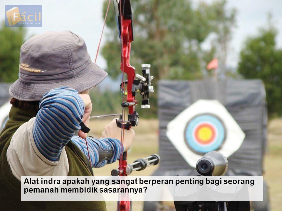 Alat indra apakah yang sangat berperan penting bagi seorang pemanah membidik sasarannya?
