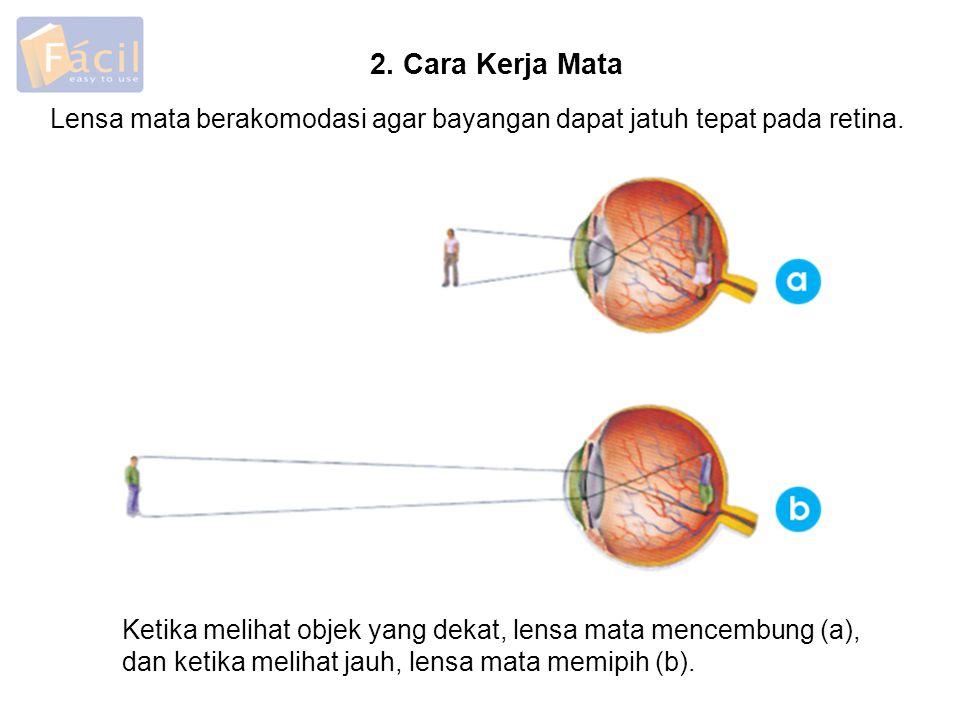 Lensa mata berakomodasi agar bayangan dapat jatuh tepat pada retina. 2. Cara Kerja Mata Ketika melihat objek yang dekat, lensa mata mencembung (a), da