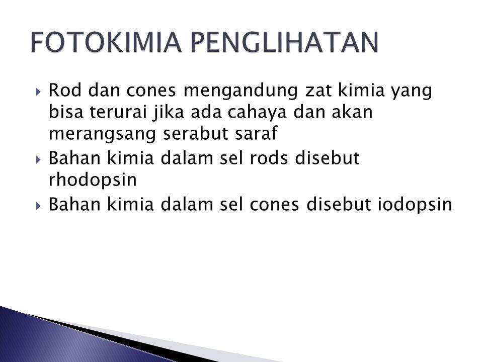  Rod dan cones mengandung zat kimia yang bisa terurai jika ada cahaya dan akan merangsang serabut saraf  Bahan kimia dalam sel rods disebut rhodopsin  Bahan kimia dalam sel cones disebut iodopsin
