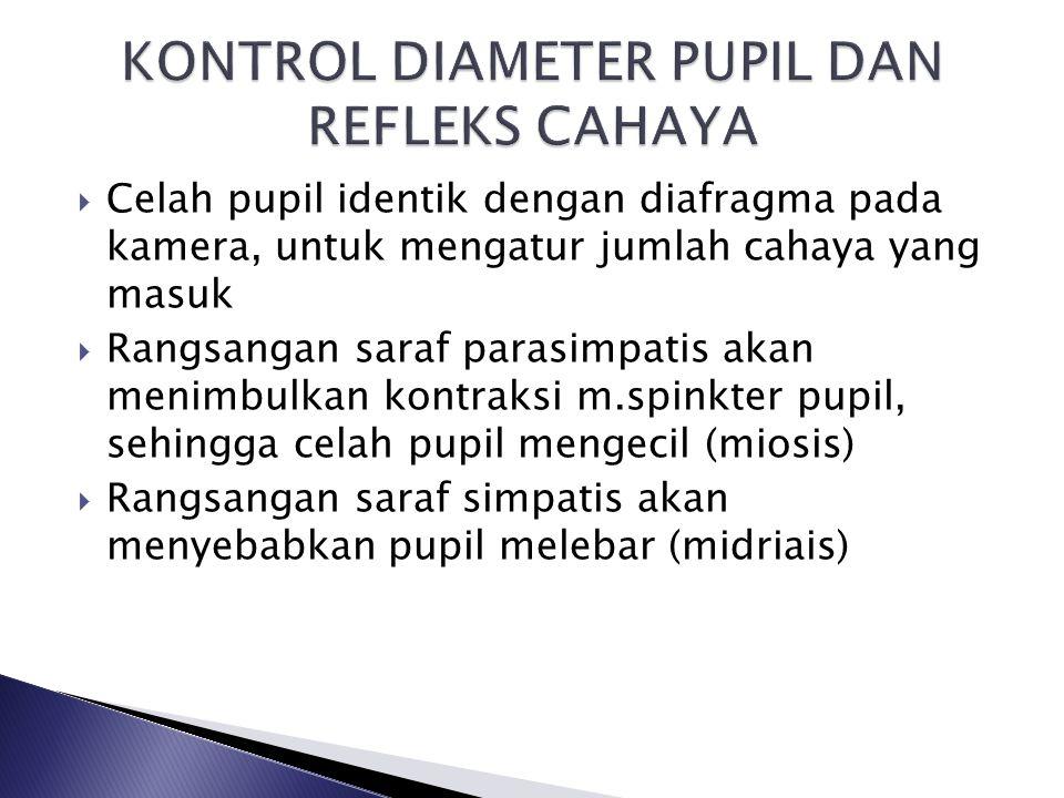  Celah pupil identik dengan diafragma pada kamera, untuk mengatur jumlah cahaya yang masuk  Rangsangan saraf parasimpatis akan menimbulkan kontraksi m.spinkter pupil, sehingga celah pupil mengecil (miosis)  Rangsangan saraf simpatis akan menyebabkan pupil melebar (midriais)