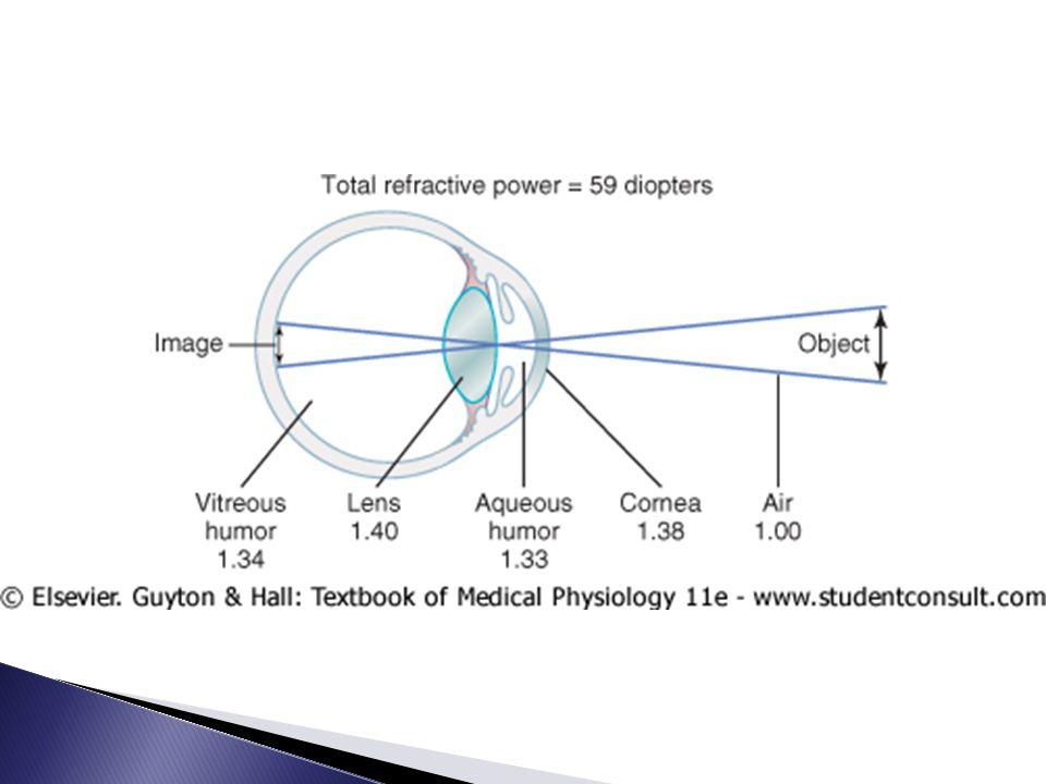  Kanak-kanak: daya refraksi bisa diubah dengan sadar dari 20 ke 34 diopter; berarti ada 'akomodasi' 14 dipter  Menggunakan penggembungan lensa ◦ kontraksi otot siliaris ◦ regangan 70 ligamen suspensorium kendor ◦ dapat dirangsang oleh saraf parasimpatis  Presbiopia: daya akomodasi turun