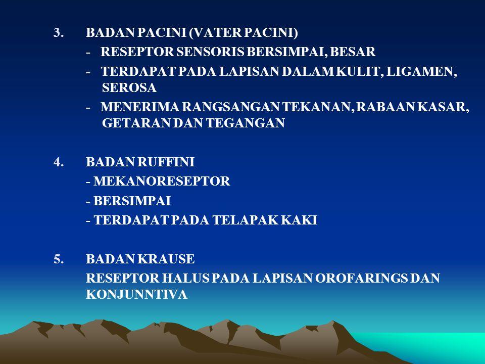 3.BADAN PACINI (VATER PACINI) - RESEPTOR SENSORIS BERSIMPAI, BESAR - TERDAPAT PADA LAPISAN DALAM KULIT, LIGAMEN, SEROSA - MENERIMA RANGSANGAN TEKANAN, RABAAN KASAR, GETARAN DAN TEGANGAN 4.BADAN RUFFINI - MEKANORESEPTOR - BERSIMPAI - TERDAPAT PADA TELAPAK KAKI 5.BADAN KRAUSE RESEPTOR HALUS PADA LAPISAN OROFARINGS DAN KONJUNNTIVA