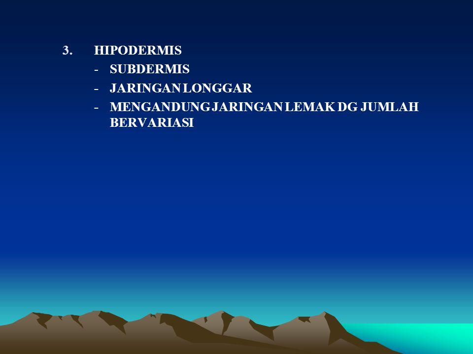 3.HIPODERMIS - SUBDERMIS - JARINGAN LONGGAR - MENGANDUNG JARINGAN LEMAK DG JUMLAH BERVARIASI