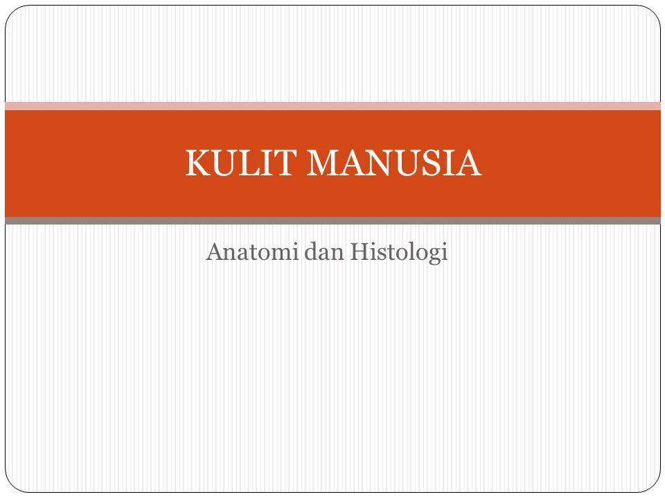 Anatomi dan Histologi KULIT MANUSIA