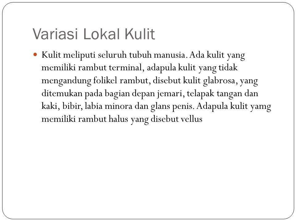 Variasi Lokal Kulit Kulit meliputi seluruh tubuh manusia. Ada kulit yang memiliki rambut terminal, adapula kulit yang tidak mengandung folikel rambut,
