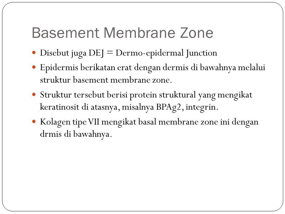 Basement Membrane Zone Disebut juga DEJ = Dermo-epidermal Junction Epidermis berikatan erat dengan dermis di bawahnya melalui struktur basement membrane zone.