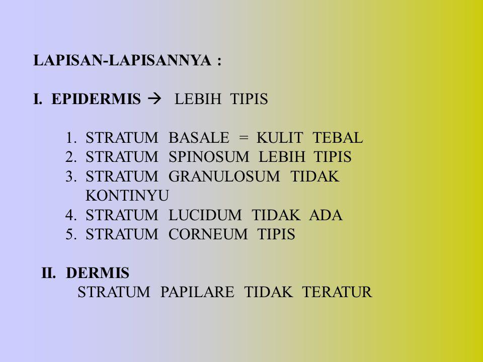 LAPISAN-LAPISANNYA : I. EPIDERMIS  LEBIH TIPIS 1. STRATUM BASALE = KULIT TEBAL 2. STRATUM SPINOSUM LEBIH TIPIS 3. STRATUM GRANULOSUM TIDAK KONTINYU 4