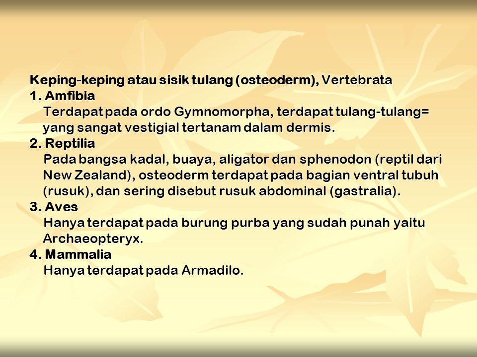 Keping-keping atau sisik tulang (osteoderm), Vertebrata 1. Amfibia Terdapat pada ordo Gymnomorpha, terdapat tulang-tulang= yang sangat vestigial terta