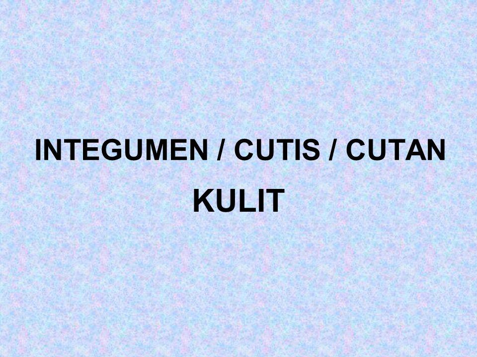 INTEGUMEN / CUTIS / CUTAN KULIT