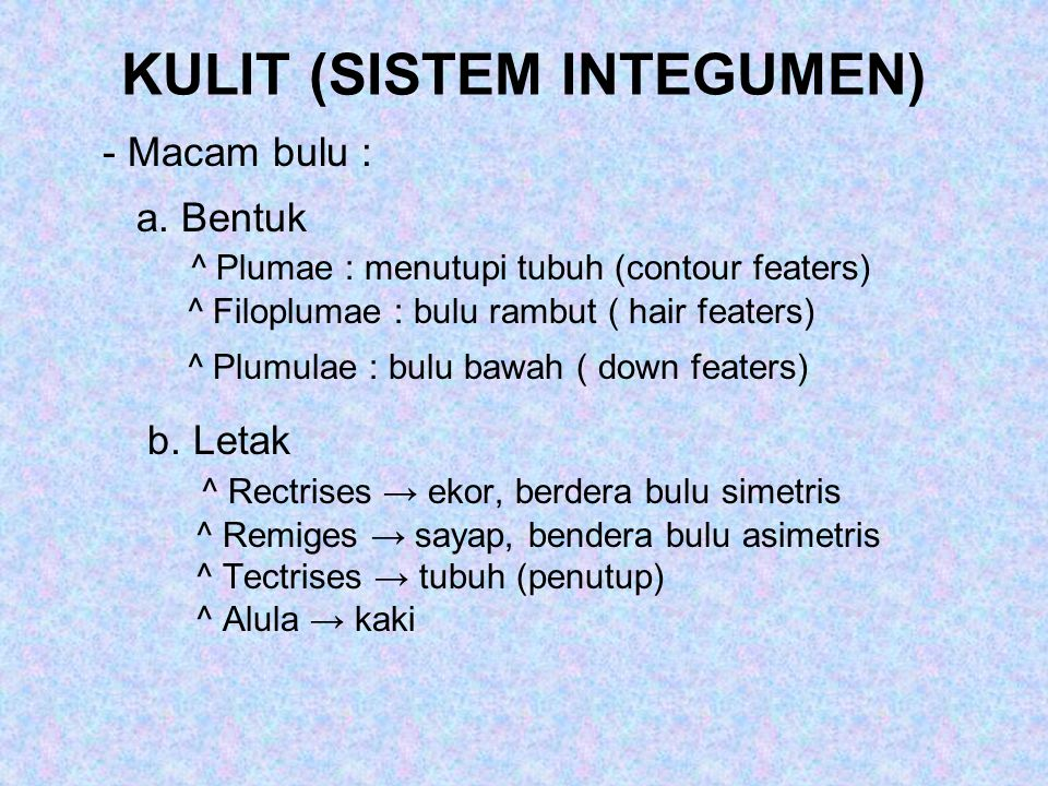 KULIT (SISTEM INTEGUMEN) - Macam bulu : a. Bentuk ^ Plumae : menutupi tubuh (contour featers) ^ Filoplumae : bulu rambut ( hair featers) ^ Plumulae :
