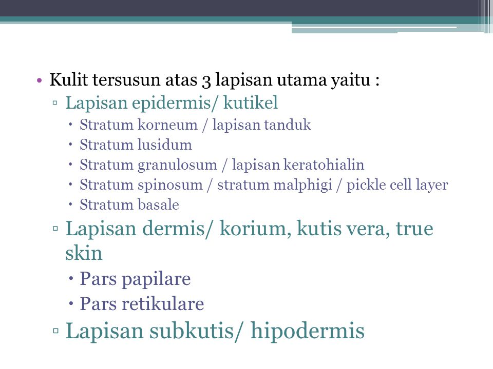 Kulit tersusun atas 3 lapisan utama yaitu : ▫Lapisan epidermis/ kutikel  Stratum korneum / lapisan tanduk  Stratum lusidum  Stratum granulosum / lapisan keratohialin  Stratum spinosum / stratum malphigi / pickle cell layer  Stratum basale ▫Lapisan dermis/ korium, kutis vera, true skin  Pars papilare  Pars retikulare ▫Lapisan subkutis/ hipodermis