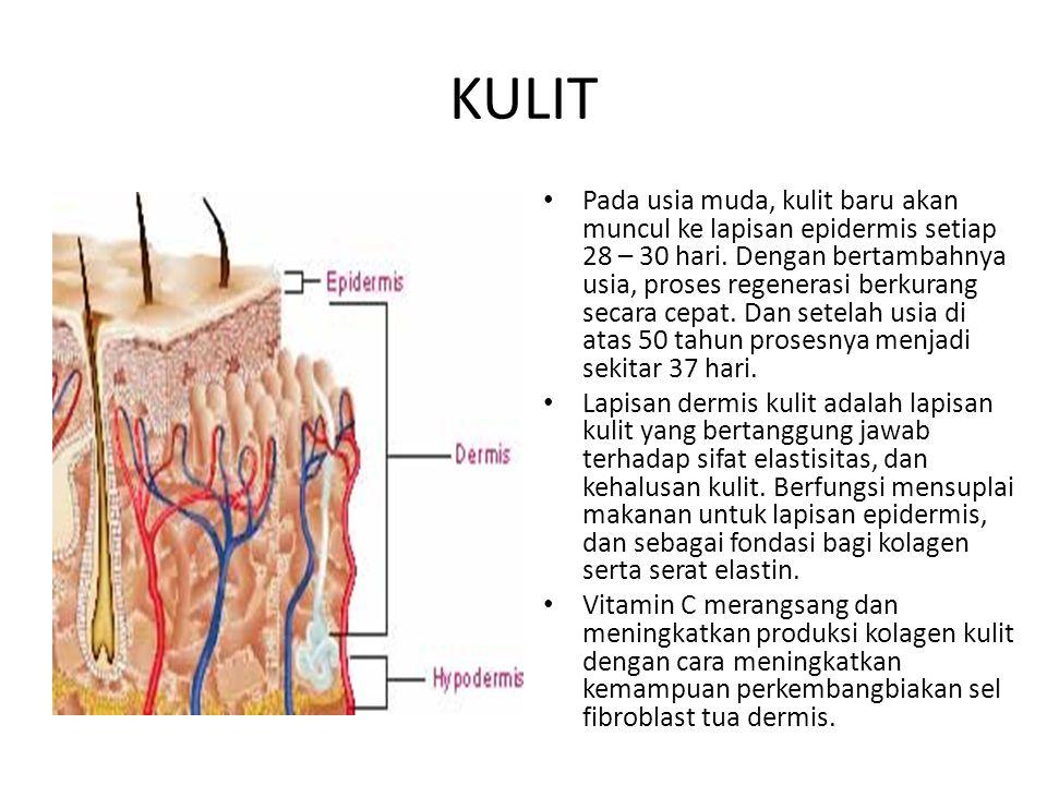 KULIT Pada usia muda, kulit baru akan muncul ke lapisan epidermis setiap 28 – 30 hari. Dengan bertambahnya usia, proses regenerasi berkurang secara ce