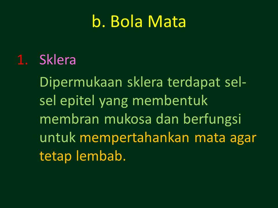 b. Bola Mata 1.Sklera Dipermukaan sklera terdapat sel- sel epitel yang membentuk membran mukosa dan berfungsi untuk mempertahankan mata agar tetap lem