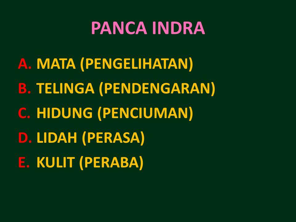 PANCA INDRA A.MATA (PENGELIHATAN) B.TELINGA (PENDENGARAN) C.HIDUNG (PENCIUMAN) D.LIDAH (PERASA) E.KULIT (PERABA)