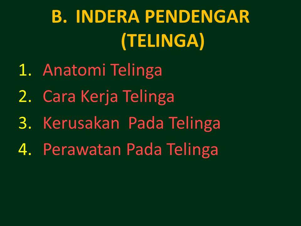 B.INDERA PENDENGAR (TELINGA) 1.Anatomi Telinga 2.Cara Kerja Telinga 3.Kerusakan Pada Telinga 4.Perawatan Pada Telinga