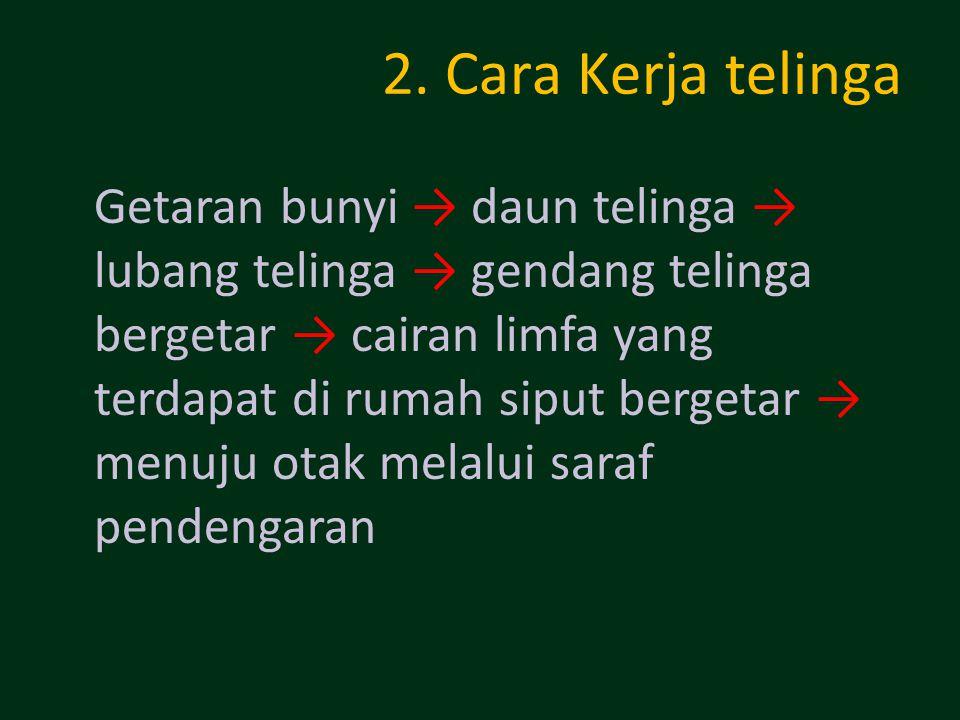 2. Cara Kerja telinga Getaran bunyi → daun telinga → lubang telinga → gendang telinga bergetar → cairan limfa yang terdapat di rumah siput bergetar →