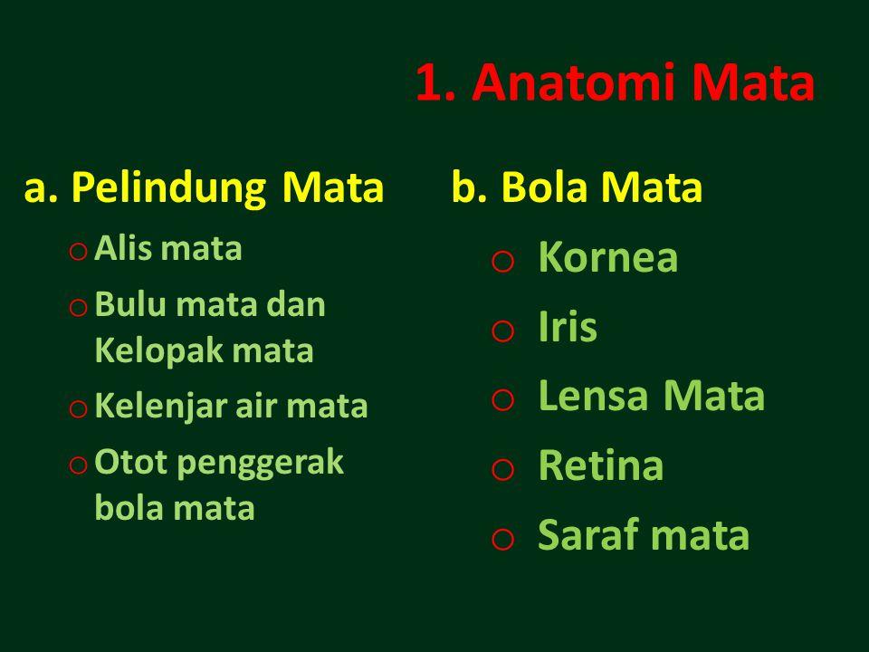 1.Anatomi Mata a.